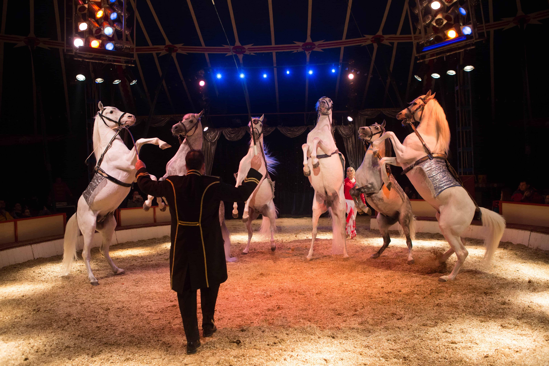 Manege frei für Circus Carelli