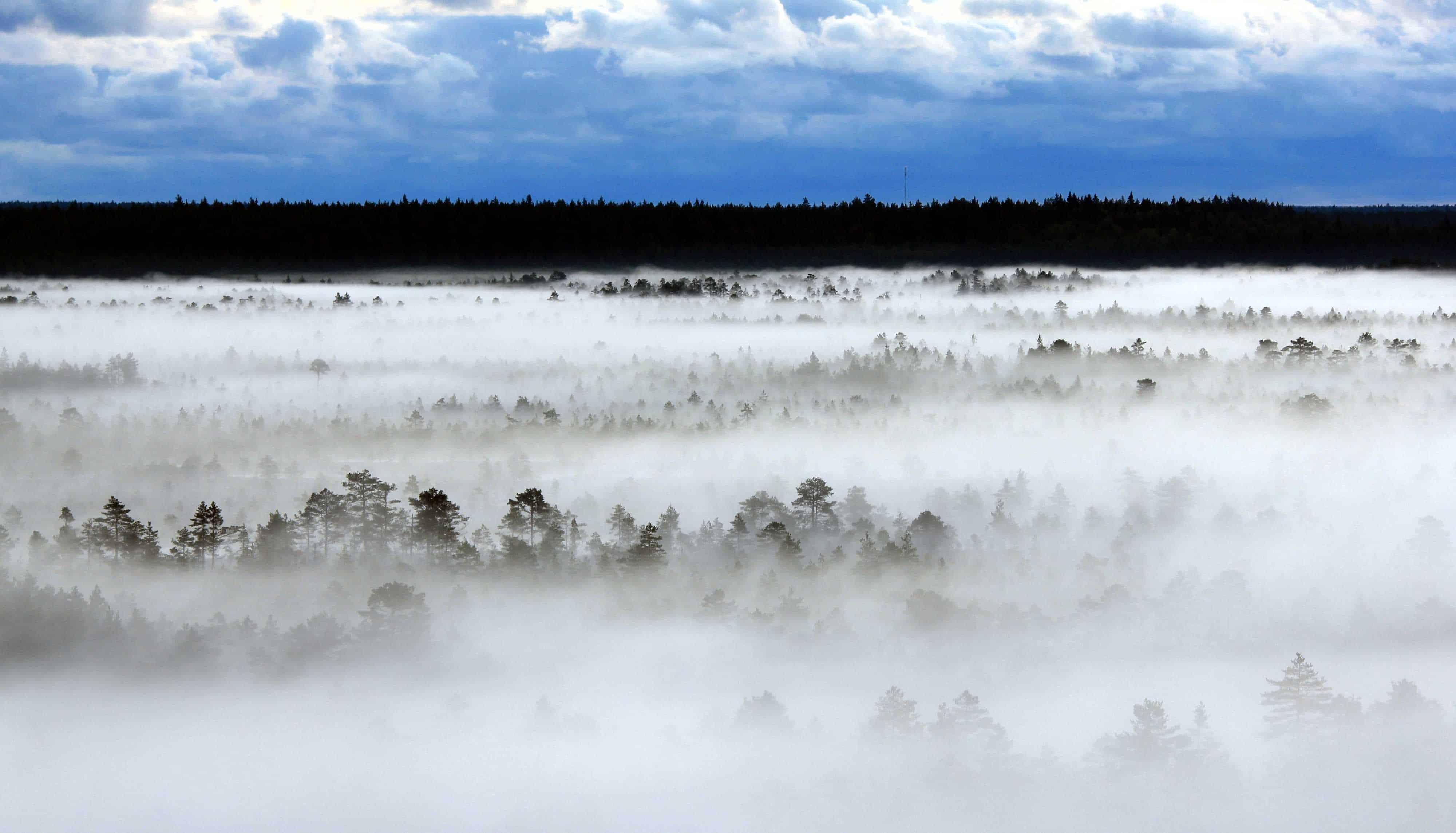 Europatag: Kennen Sie Estland?