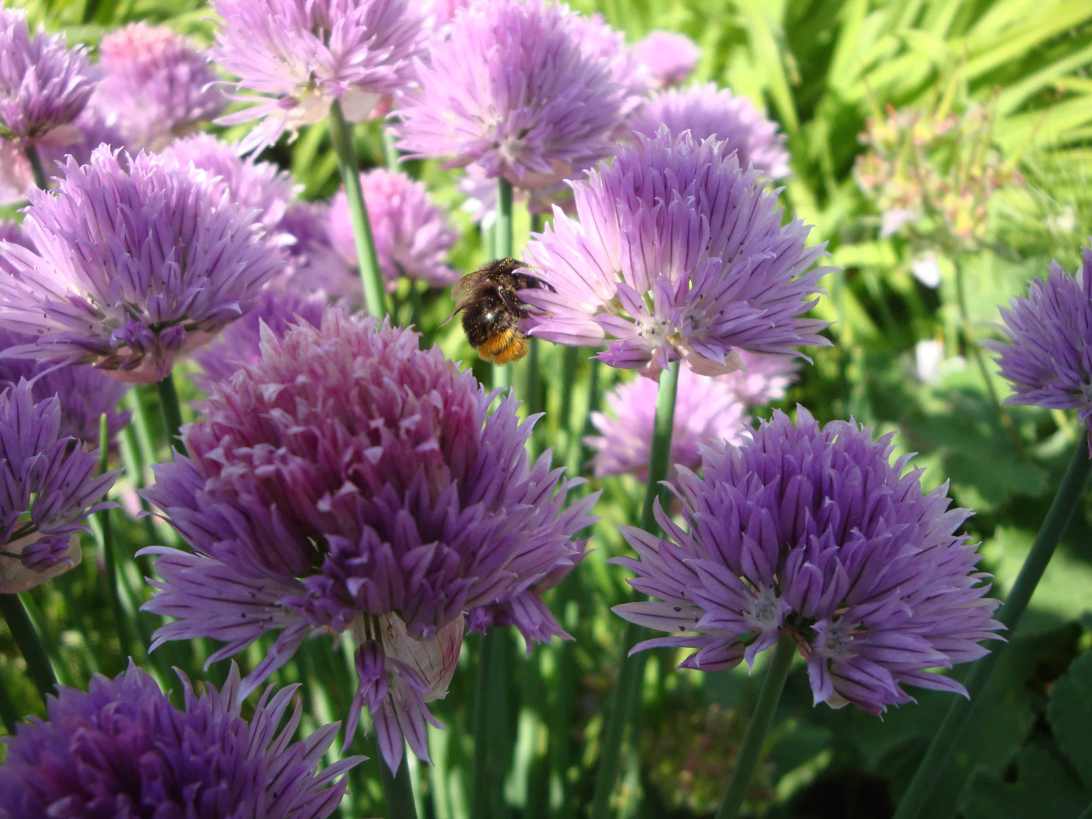 Gartentipps für den Monat Juni