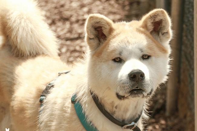 Tierheim Regensburg: Hund und Katz' auf der Suche