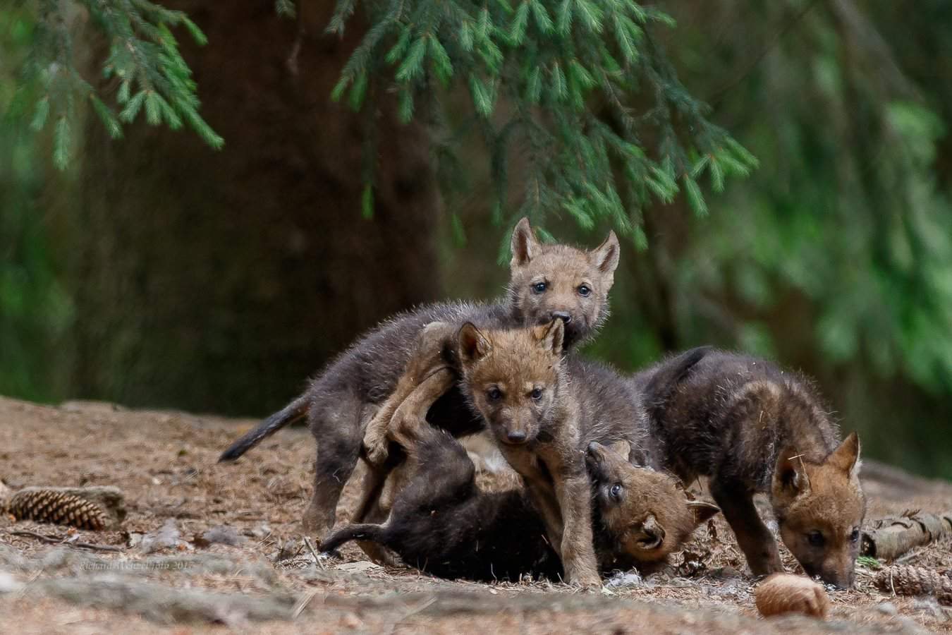 Tierbabys  im Bayerwald-Tierpark Lohberg bestaunen