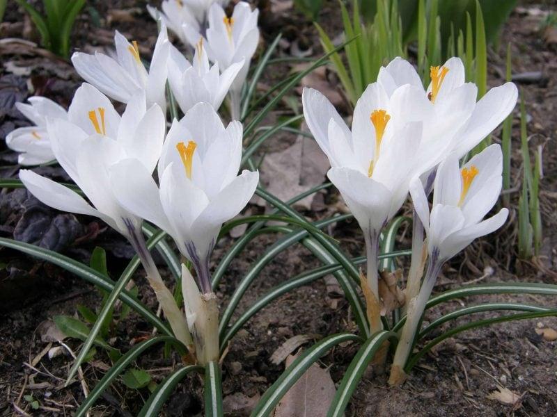 Gartentipps für den März