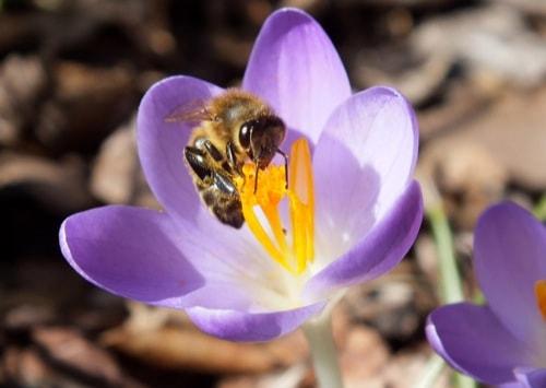 Alarmierend: Bienen-Population seit 20 Jahren rückläufig