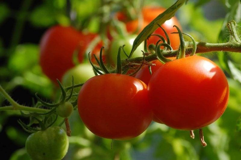 Landratsamt gibt Gartentipps für den Mai