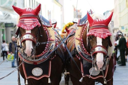 Am morgigen Donnerstag beginnt die Maidult in Regensburg. Zuvor gibt es einen Festzug durch die Altstadt
