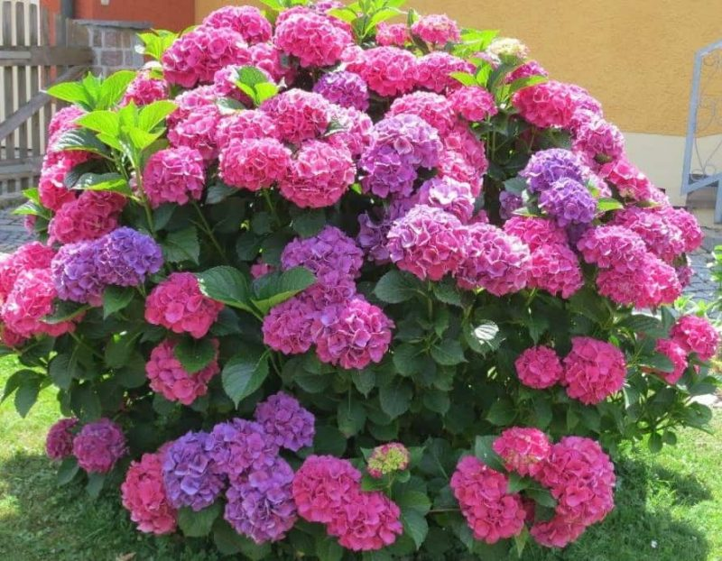 Gartentipps für den August
