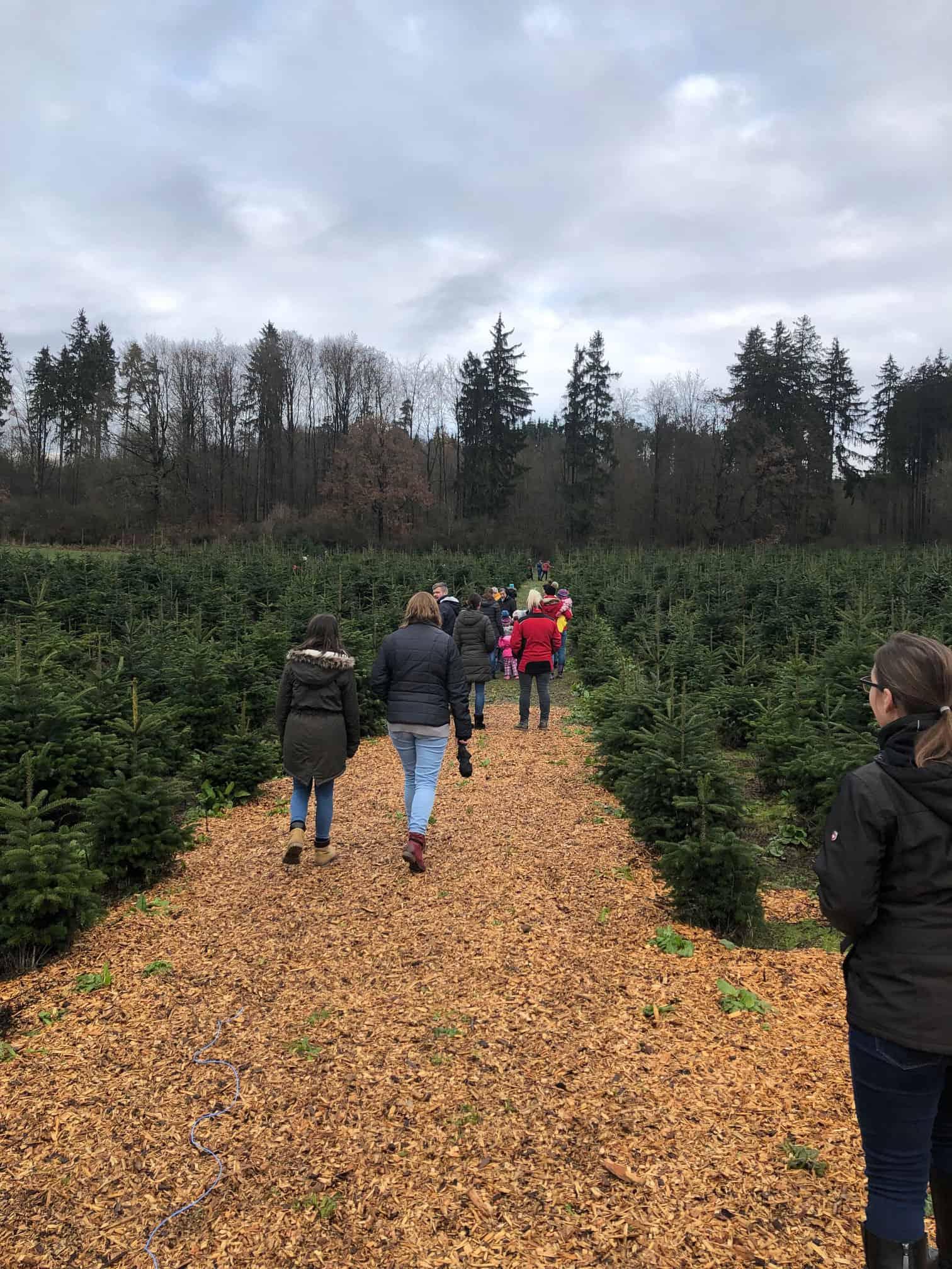 Größte Auswahl in Schierling und Umgebung Weihnachtsbäume von der Christbaumplantage