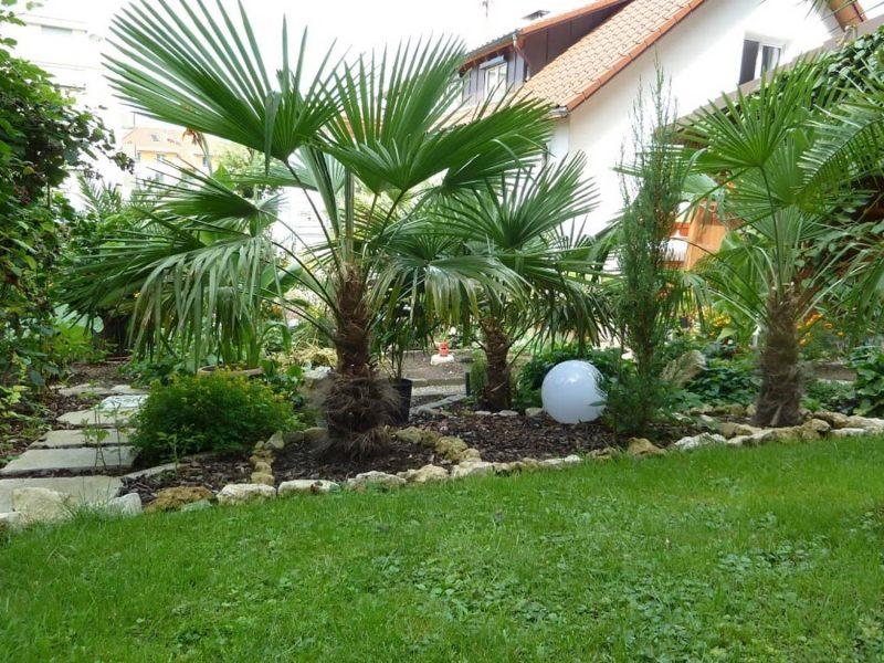 Der Palmenstadl in Pfakofen Mediterranes Flair im Garten