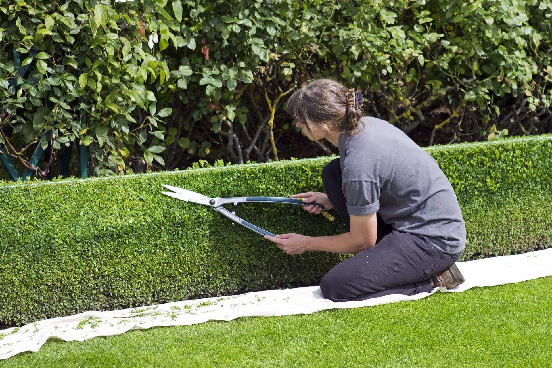 Experten für den Garten in Obertraubling Baumschule Thiem sorgt für alles Grüne