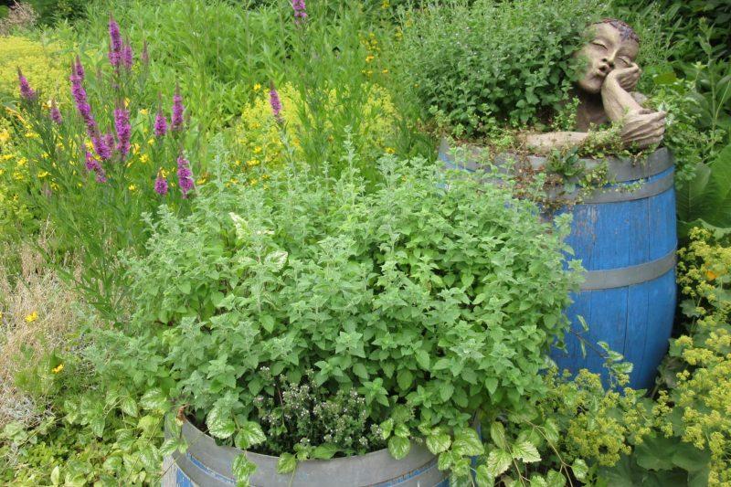 Das Landratsamt Regensburg informiert Gartentipps für den Monat Juni