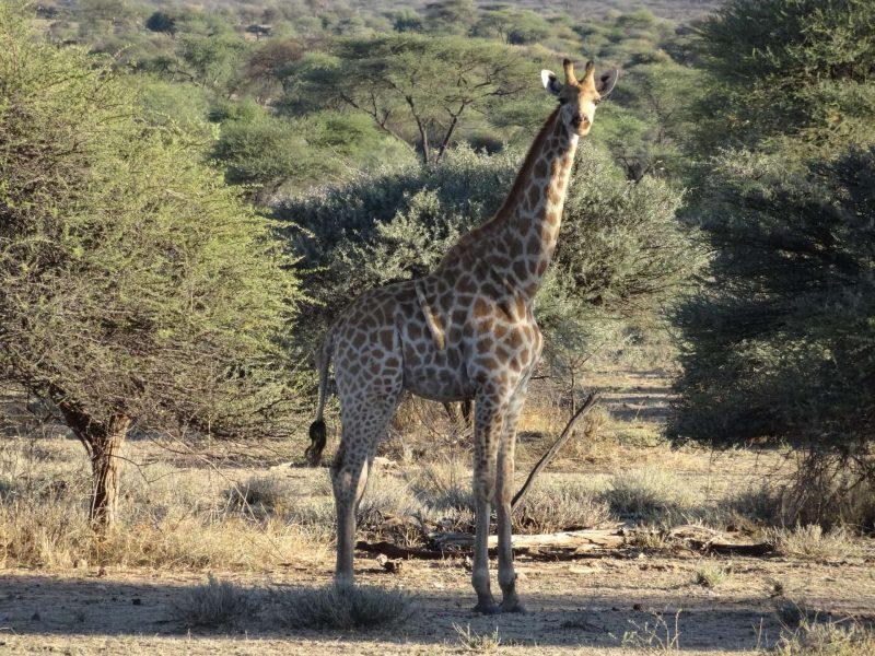 Ans andere Ende der Welt: Mit Reisekreativ ins abenteuerliche Südafrika Von den Big Five zum Tafelberg