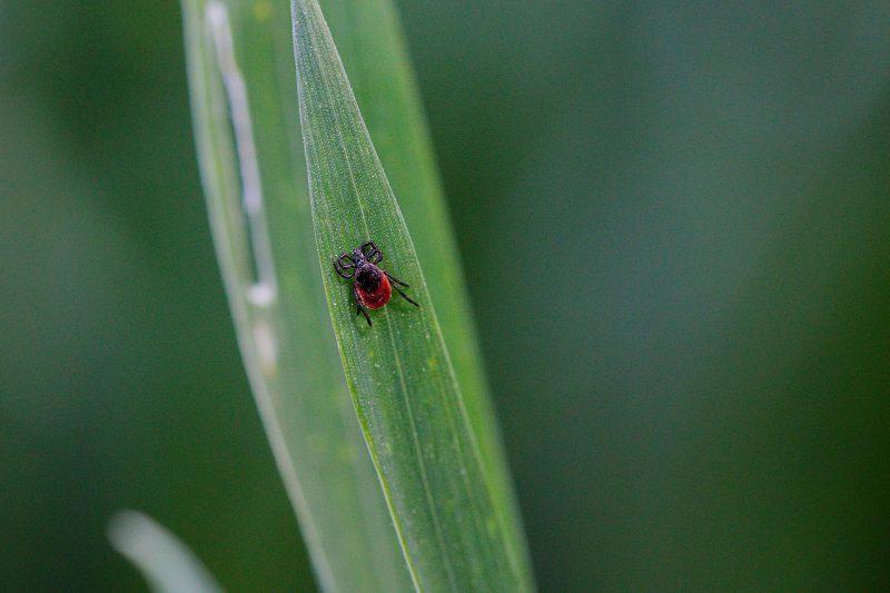 Geheimtipp gegen fiese Parasiten Schwarzkümmel-Öl von Reformhaus Vilsmeier wirkt gegen Zecken