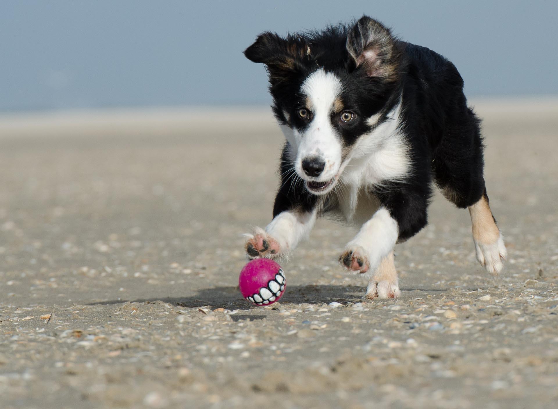 Hunde-Beach-Party bei ZOO&Co Haubensak in Regensburg