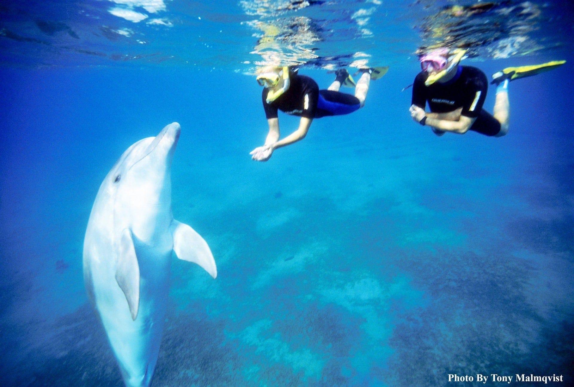 Am Roten Meer mit Delfinen schwimmen Heilsam und unvergesslich: Die faszinierende Welt der Delfine