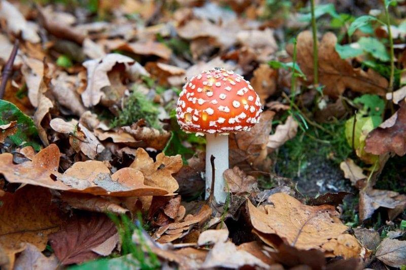 Vorsicht beim  Pilze sammeln! Tipps für einen sicheren Pilzgenuss