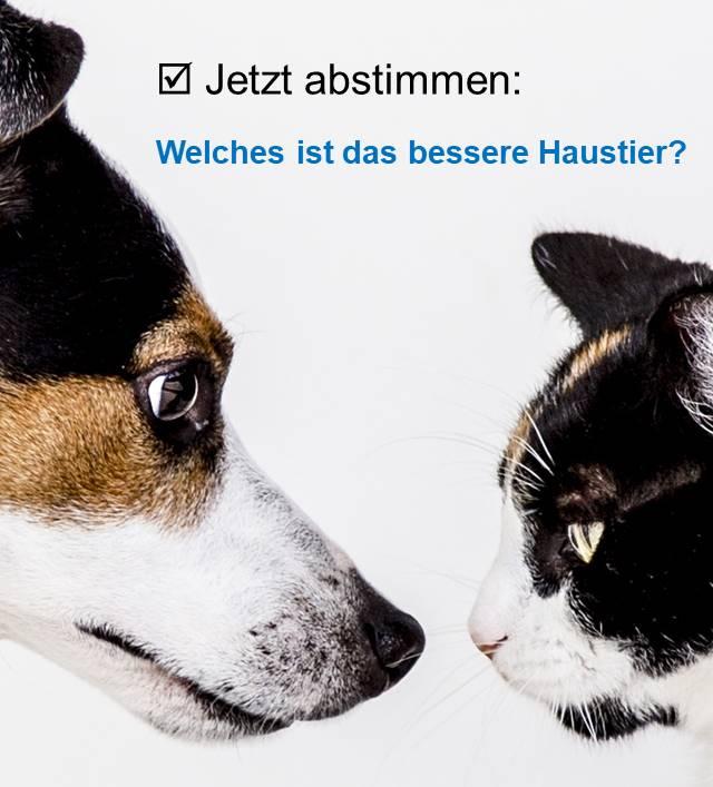 Umfrage zum Welthundetag Hund oder Katze?