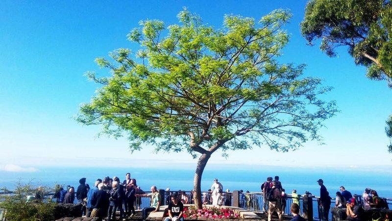 """Blumeninsel Madeira Mit Reisekreativ in den """"ewigen Frühling"""""""