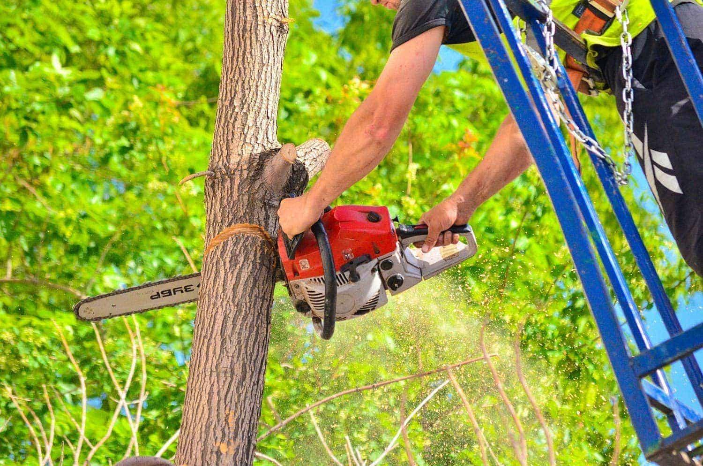 Regensburg: Gartenamt fällt bis Ende Februar über 250 Bäume Jetzt kommt die Kettensäge
