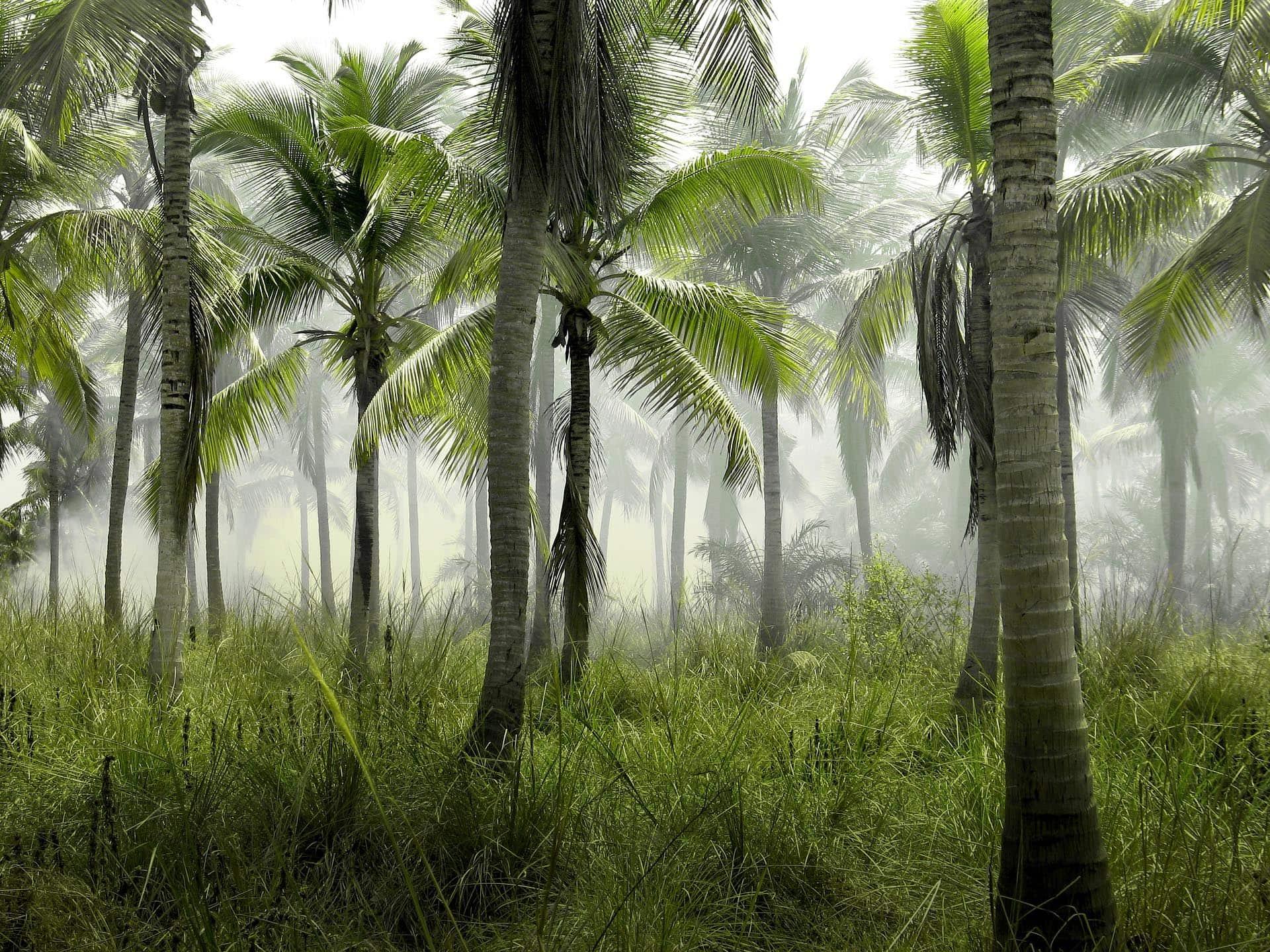 """200 Jahre nach Brasilien-Expedition Tagung über """"Naturverständisse"""" am 14. und 15.2."""