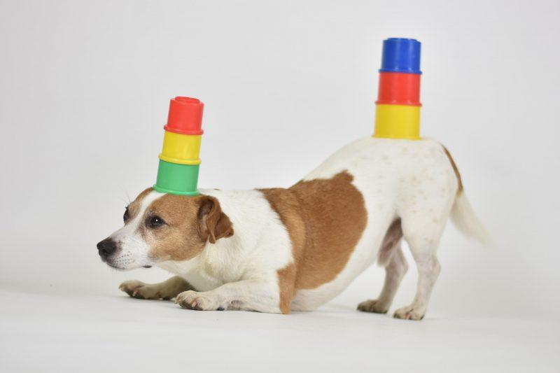 Mein Hund Messe