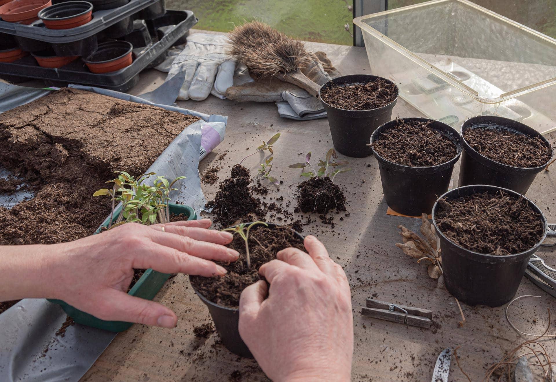 Für die Natur gibt es keinen Stillstand Auch wenn der Alltag in Teilen eingeschränkt ist, gibt es im Garten jetzt einiges zu tun