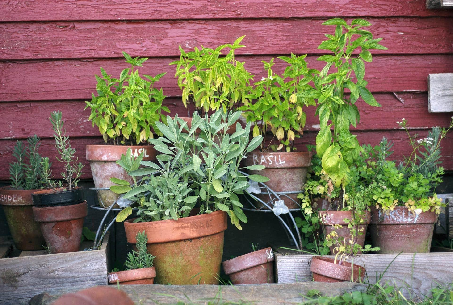 Jetzt ist Hochsaison im Garten Von Rasenpflege bis Sommerschnitt: die wichtigsten Arbeiten im Juni