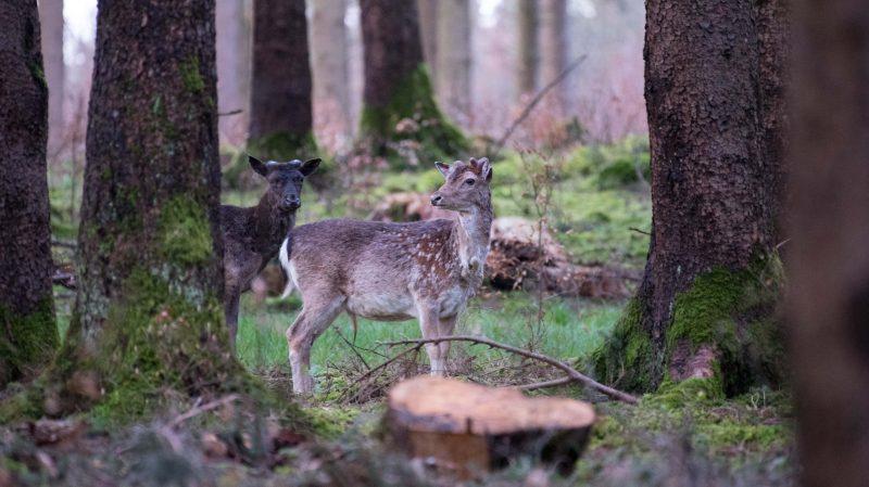 Klimanotstand in bayerischen Wäldern Dürren, Stürme, Schädlinge: 26,5 Mio. Kubikmeter Schadholz in Bayerns Forst
