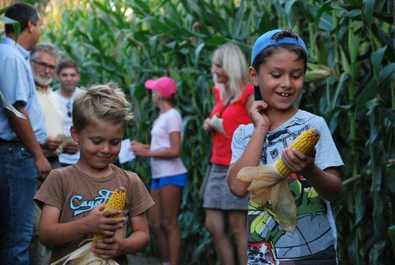 Spaß für Jung und Alt – das Maislabyrinth in Rinkam