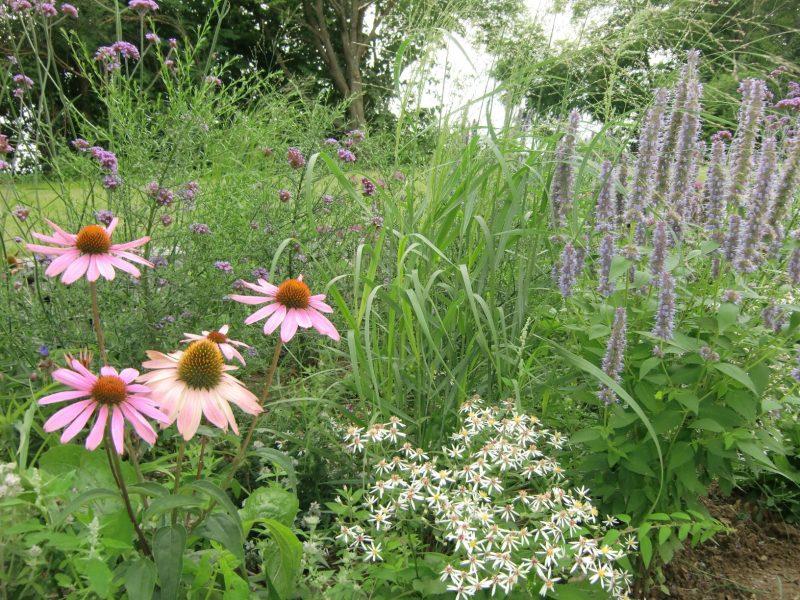 Ab ins Grüne! Gartentipps für den September Das Sachgebiet Gartenkultur und Landespflege am Landratsamt Regensburg informiert