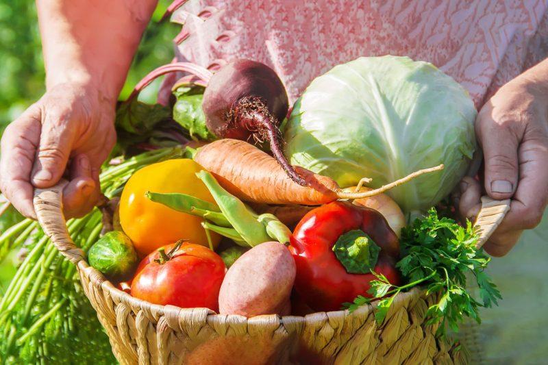 bio-markt-gemüse-foto-yanadjan-AdobeStock_248175757
