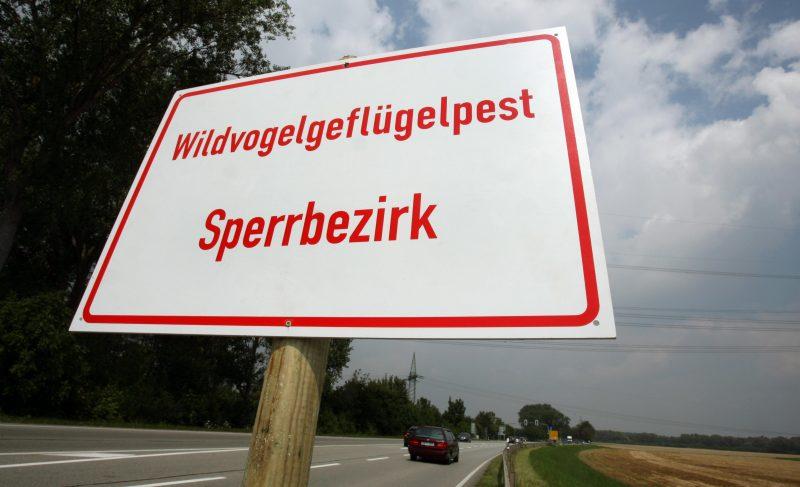 «Wildvogelgeflügelpest Sperrbezirk» steht auf einem Straßenschild