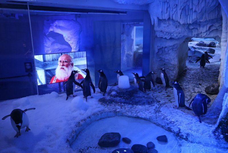 Weihnachtsfilm für Pinguine