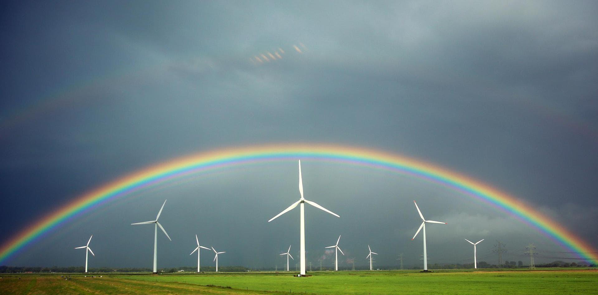 Ökostrom macht die Hälfte des Stromverbrauchs aus Daten für 2020