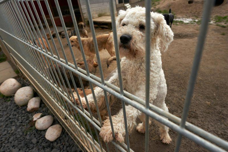 Hunde in einem Tierheim