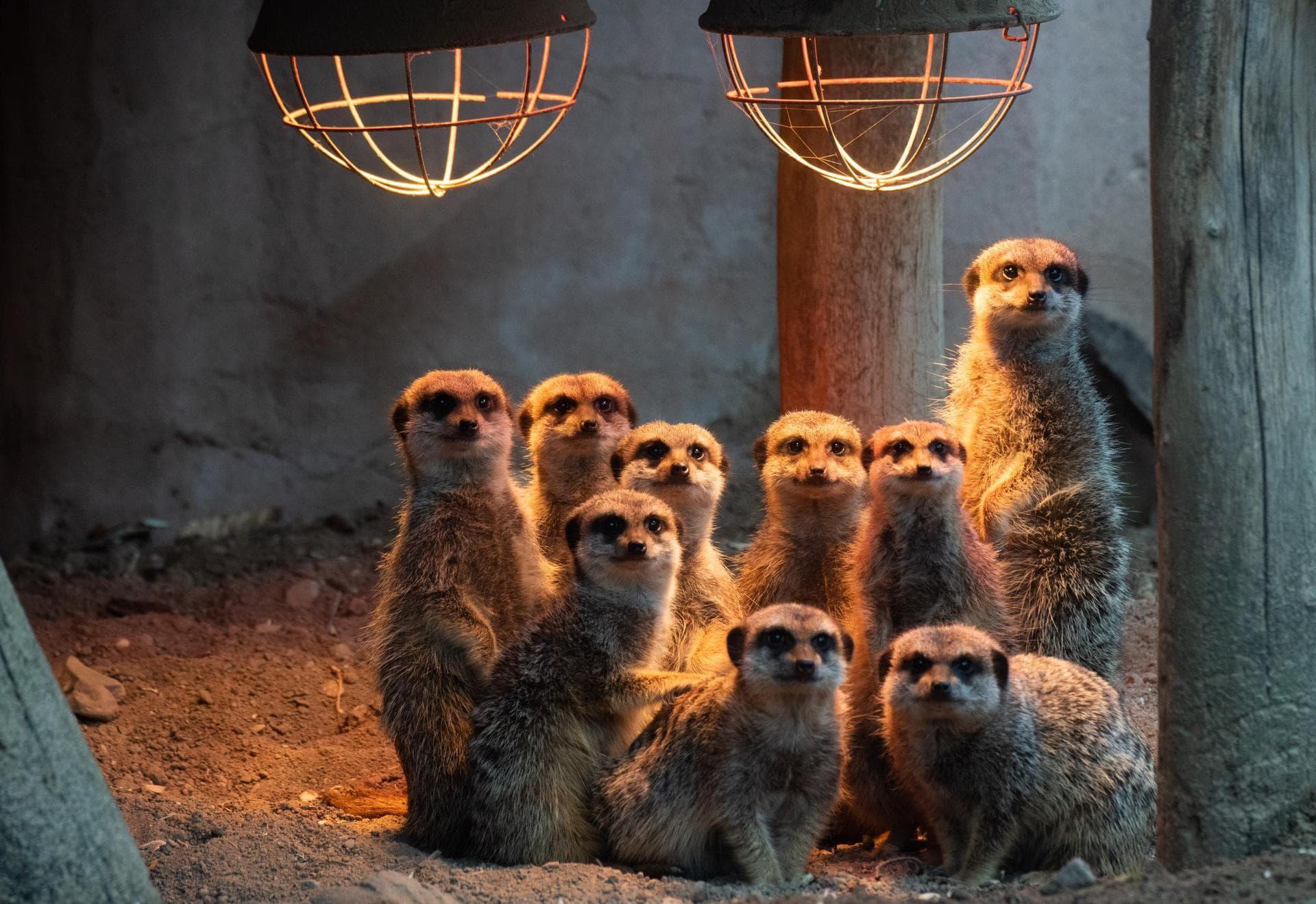 Zoos wollen mit Patenschaften Corona trotzen Rentier oder Ratte?