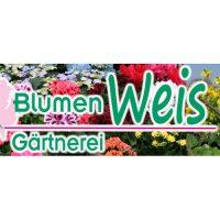 Blumen Weis Regensburg
