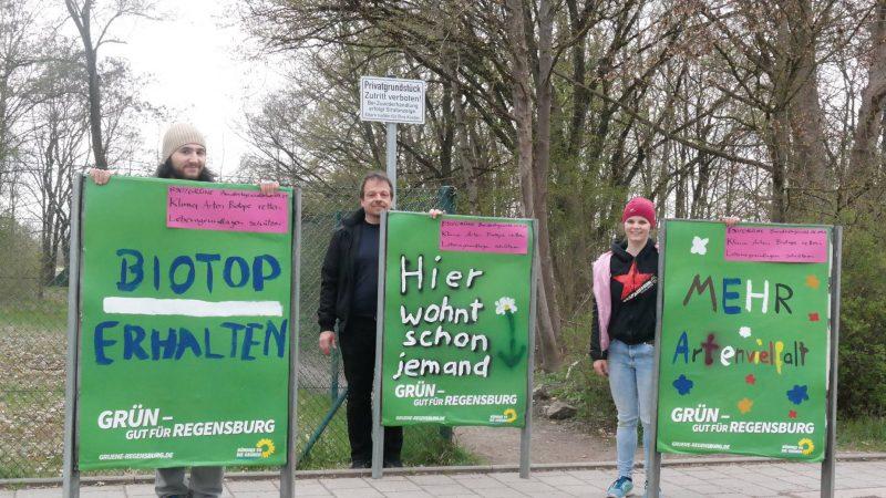 Gegen Bebauung im Regensburger Westen Grüne geben Biotop und Bäumen an der Lilienthalstraße eine Stimme