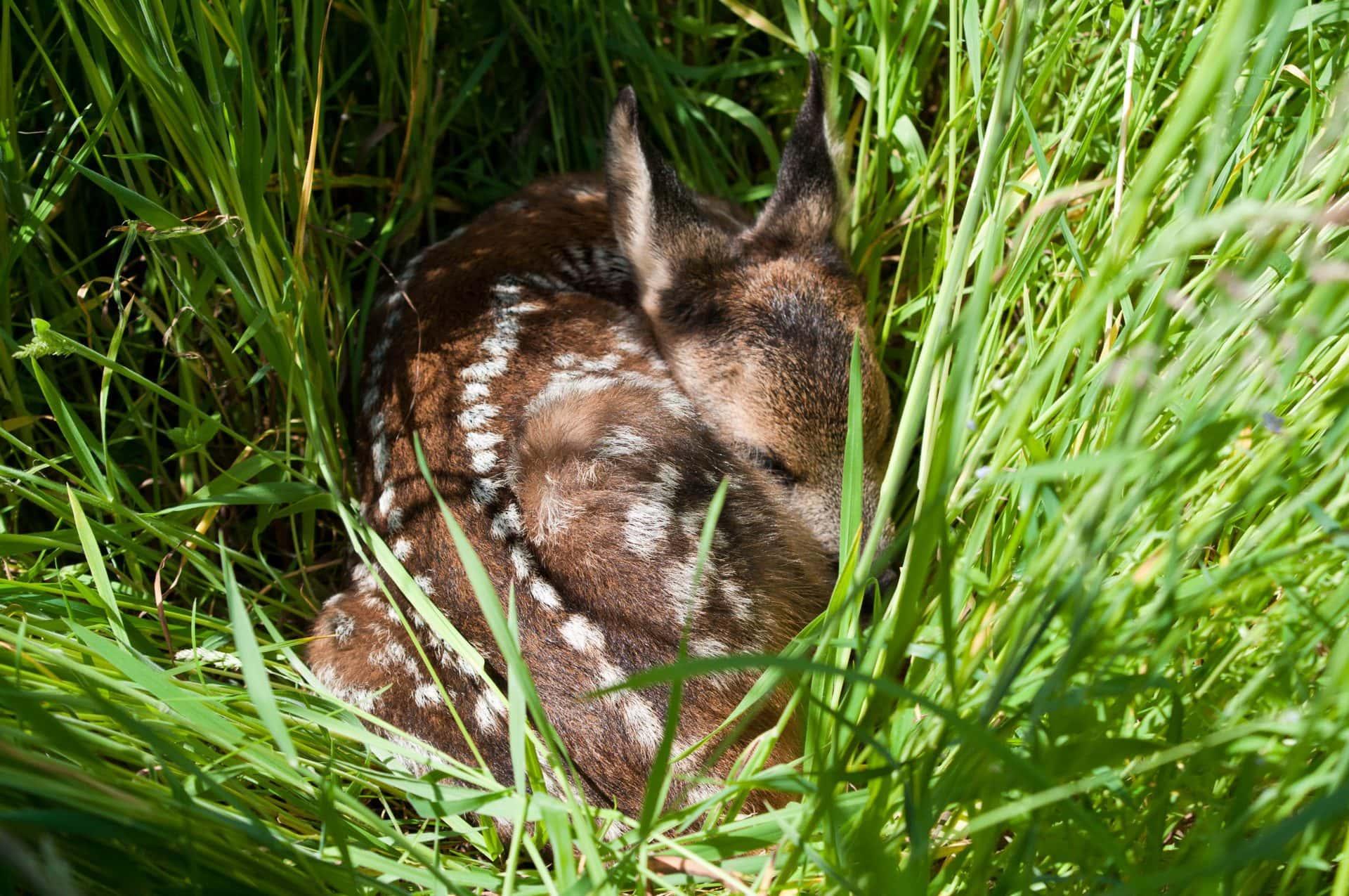 Babyalarm in Wald und Feld Der Deutsche Jagdverband gibt Tipps für die Brut- und Setzzeit.