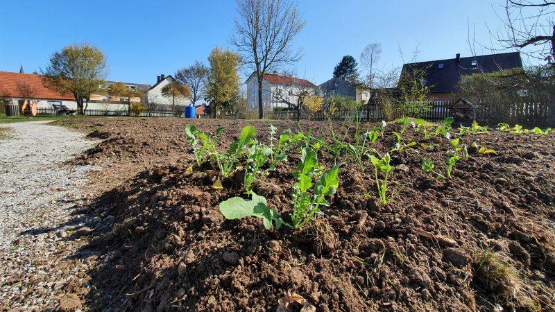 Schierling sucht Gärtner für Gemeinschaftsgarten Die Pachtdauer ist zunächst auf ein Jahr begrenzt und im ersten Jahr kostenlos